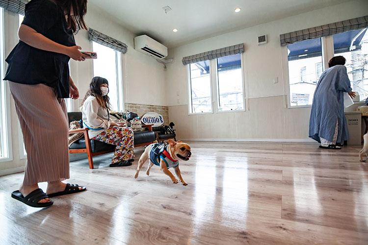 室内ドッグラン|Oliilio オリイーリオ 大切な愛犬ととっておきの時間をすごせる DOGカフェ&ダイニング