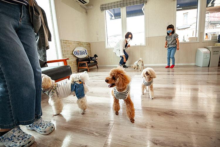 狂犬病ワクチン証明書をご提示ください|Oliilio オリイーリオ 大切な愛犬ととっておきの時間をすごせる DOGカフェ&ダイニング