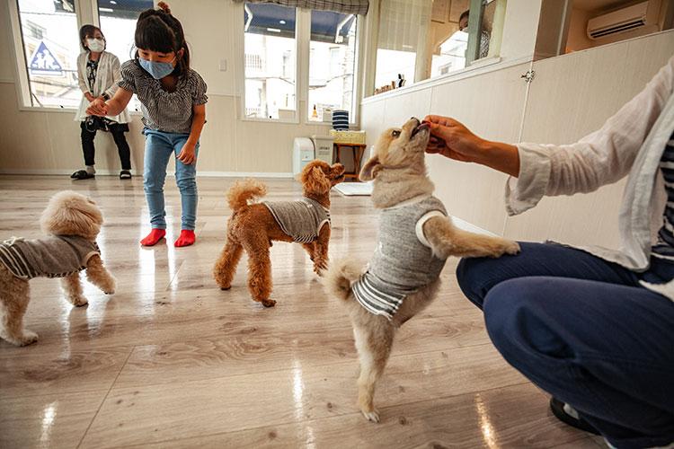 ワンちゃんやお子さんも大喜び|Oliilio オリイーリオ 大切な愛犬ととっておきの時間をすごせる DOGカフェ&ダイニング