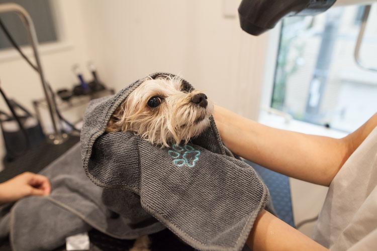 アーユルヴェーダパック Oliilio オリイーリオ 大切な愛犬ととっておきの時間をすごせる DOGカフェ&ダイニング